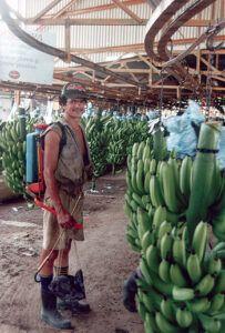 herbicide-spraying_bananer