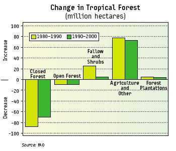 tropical_changes_forrest